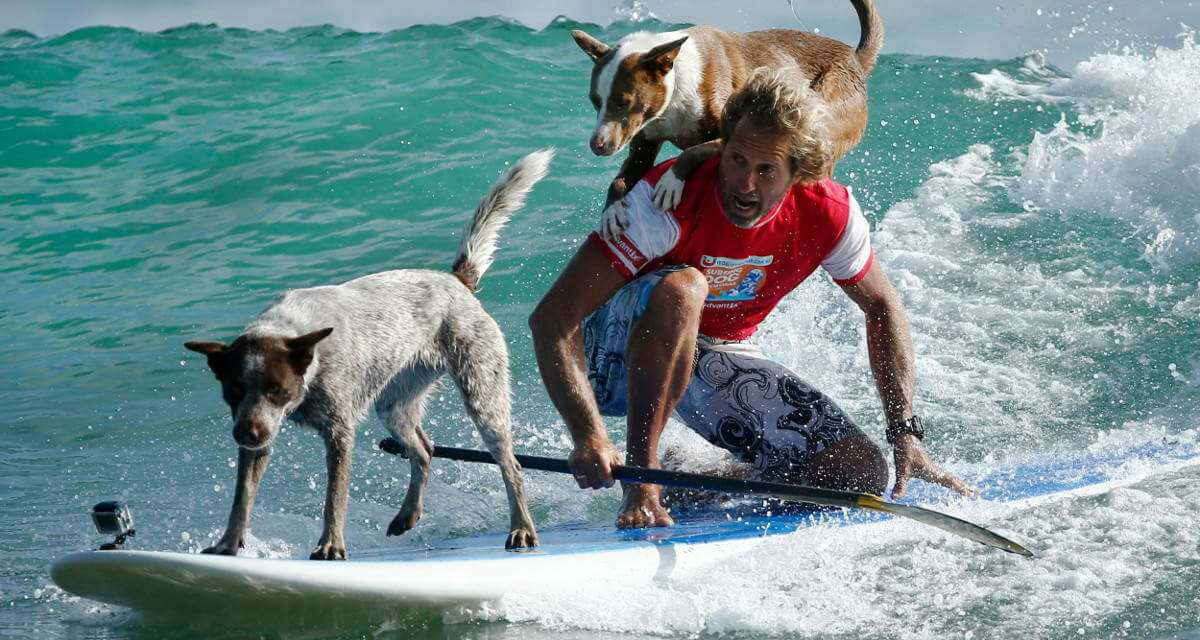 Dogs Surfing 1200